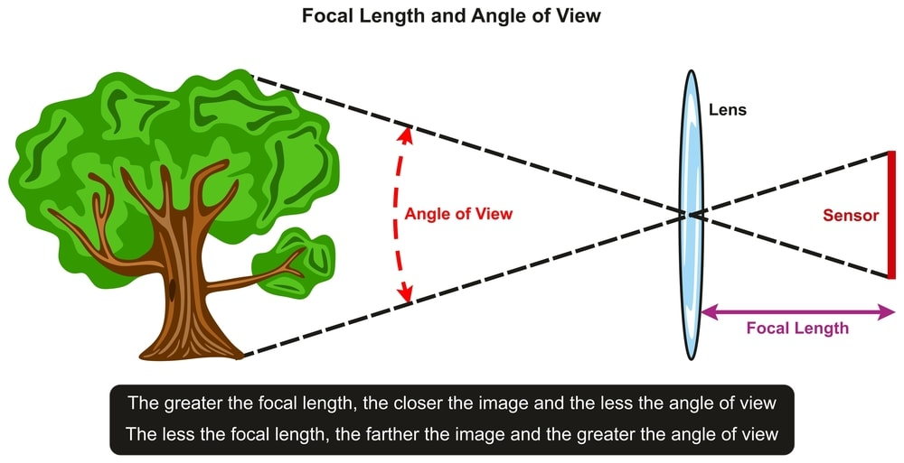 Focal Length and Angle of View infographic diagram showing relation between them with an example of tree in front of lens and sensor